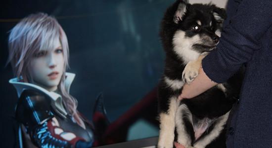 Till skillnad från många andra hundar verkar Tifa inte bry sig nämnvärt om åskan, se bara hur avslappnad hon är framför Lightning...